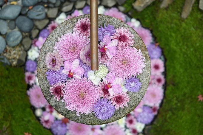 行田八幡神社の花手水は最高にインスタ映え!