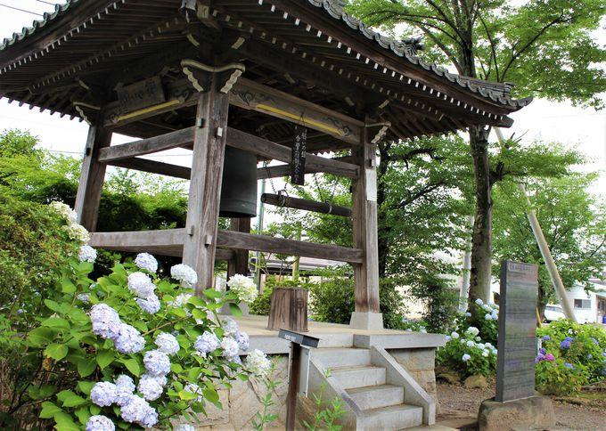 曹源寺の多層的な魅力に触れる参拝を