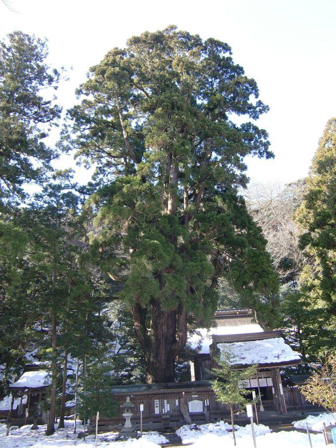 縁結び・安産のパワスポ!「若狭姫神社」