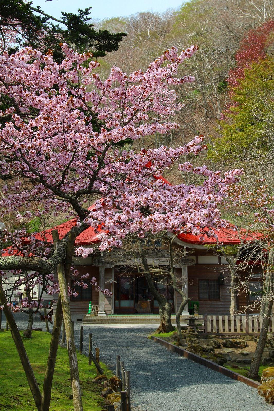 北海道有数の桜の名所・史跡!国泰寺跡と周辺について