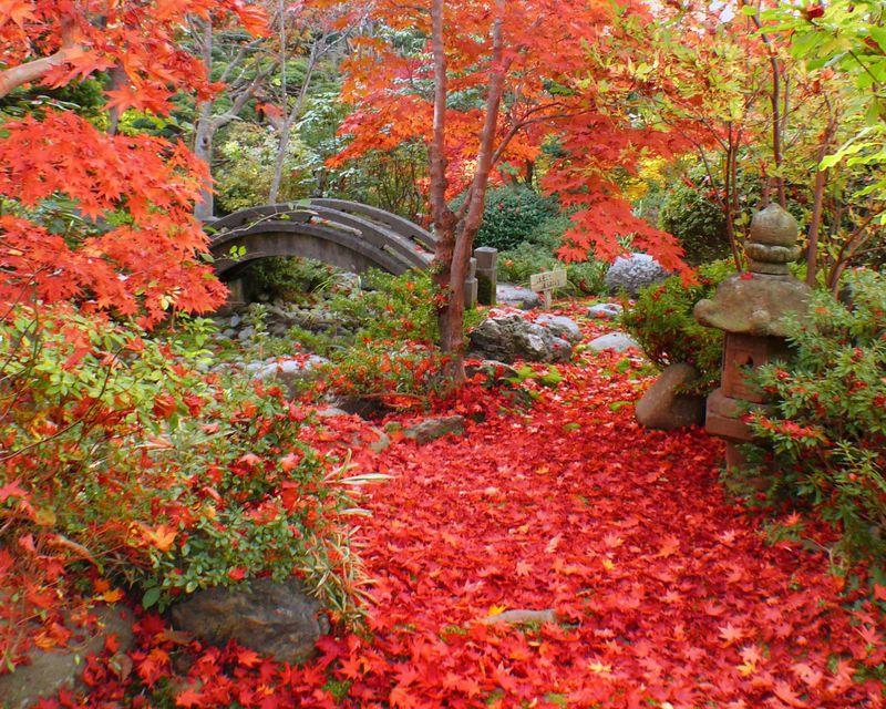 北海道八雲町の梅村庭園は紅葉の名所!近くには木彫熊資料館も!