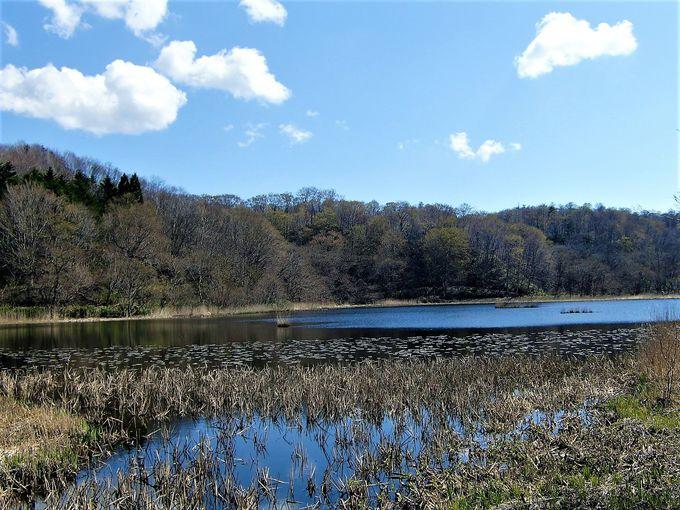 島が浮かぶ池!景色も素晴らしい「浮島公園」