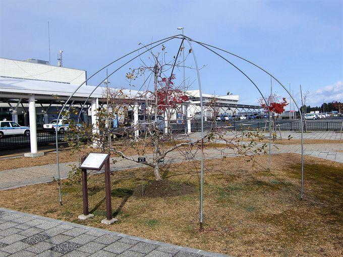 ユーミンの歌とりんごの木がある「いわて花巻空港」の概要