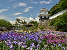 長崎県・大村公園は桜・花菖蒲の名所!近くに「龍馬伝」ロケ地も