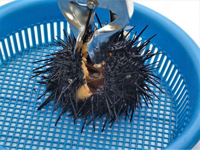 ウニ漁に挑戦してその場で食べよう!「神居海岸パーク」