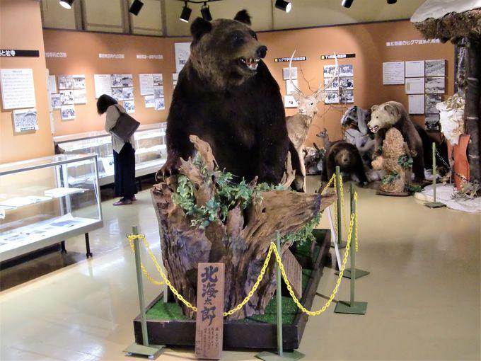 人食い羆の恐怖!三毛別羆事件を展示「苫前町郷土資料館」