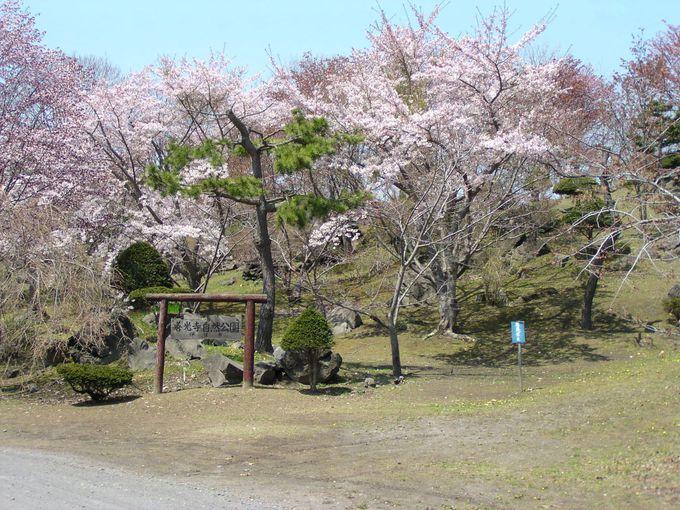 噴火に耐えた桜に三十三観音!隣の善光寺自然公園は桜の名所
