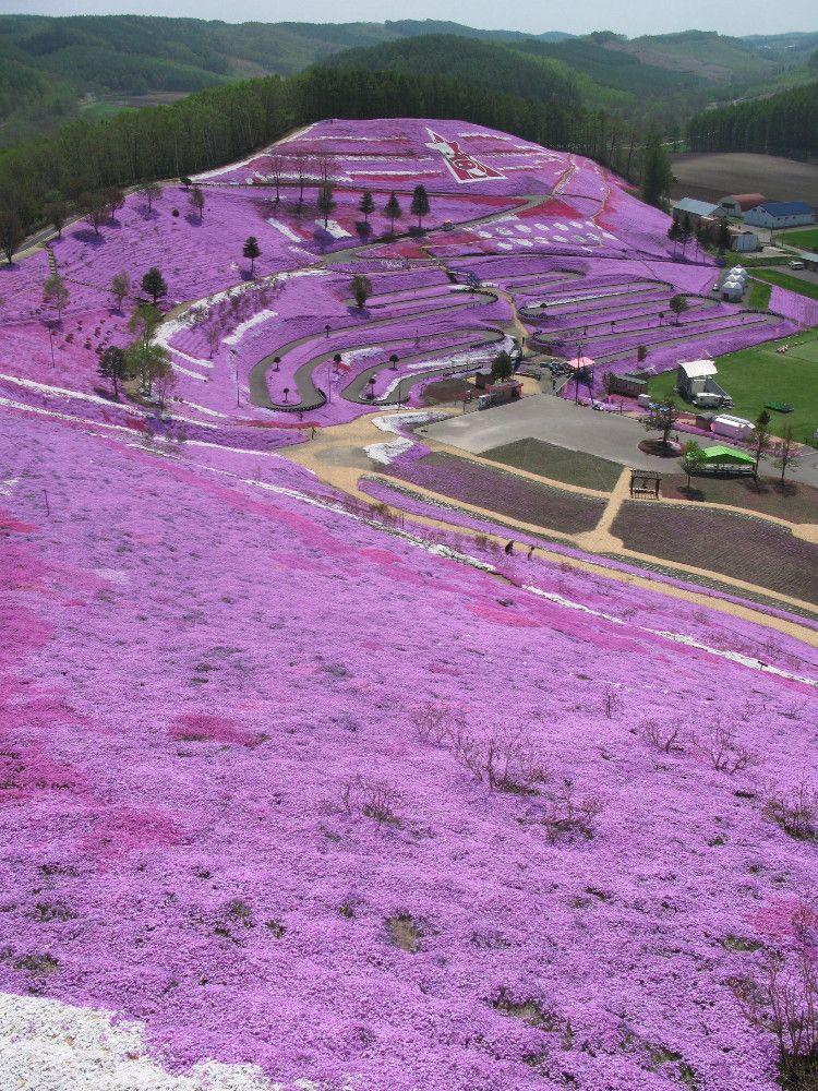 眼下に広がるピンクのじゅうたん