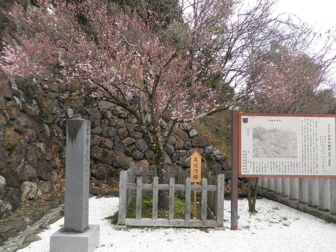 右近の橘・左近の桜
