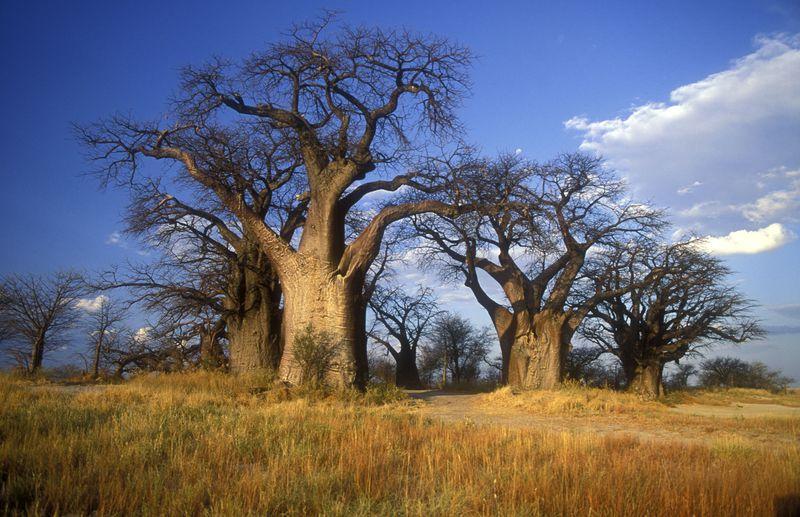 神話と伝説の舞台!南アフリカ最北部の『リンポポ州』で大地のパワーを感じよう!