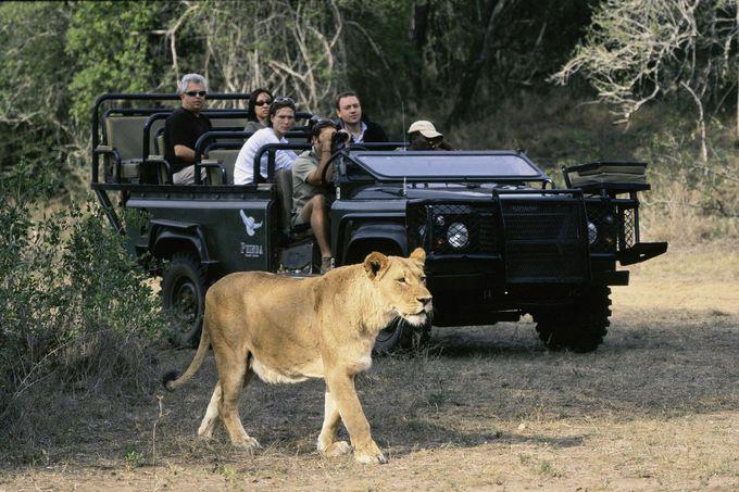ビッグファイブ・サファリが楽しめる『クルーガー国立公園』