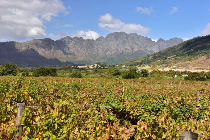 南アフリカの「ワインランド」で美食と絶景を堪能!