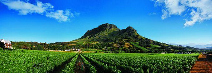 人と自然にやさしい「南アフリカワイン」