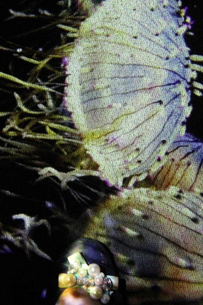 クラゲの映像があらゆるところに投影されている