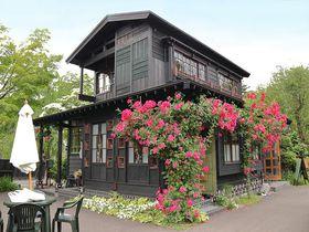 秋田・武家屋敷カフェ「ねずねこ」は昭和レトロな癒しの空間