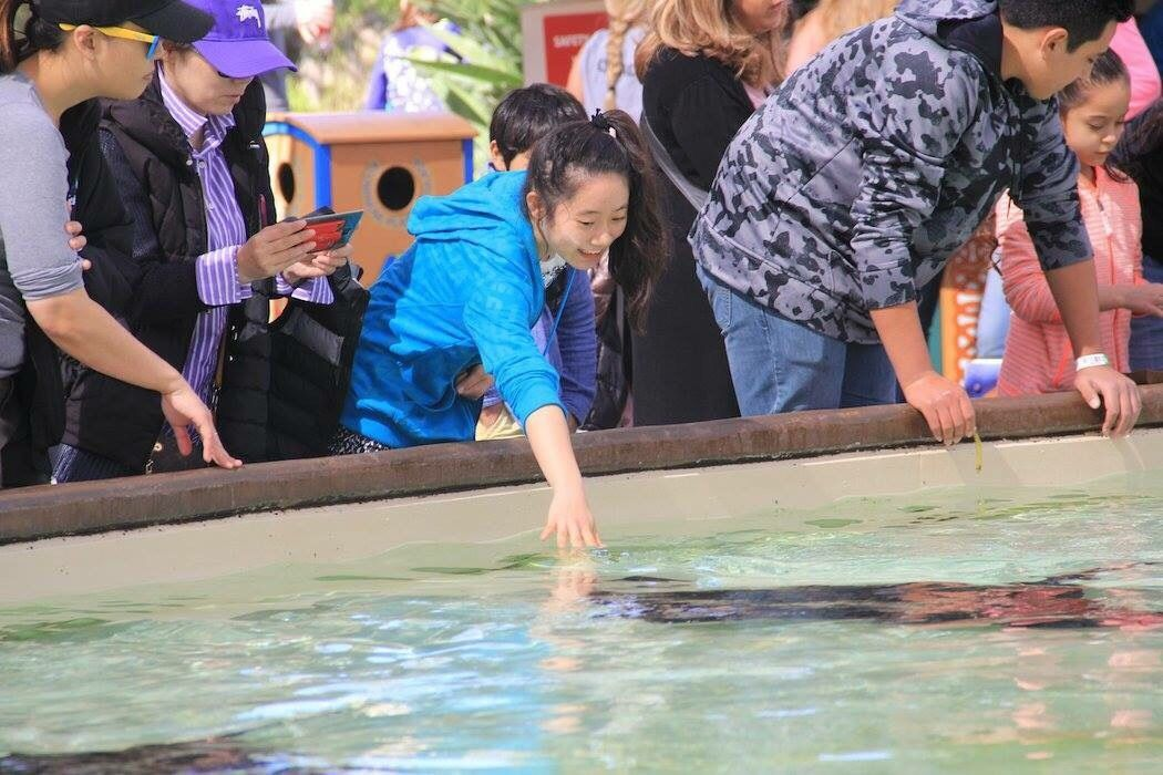 イルカに、エイに、オットセイ!いろにろな海の仲間と触れ合えます!