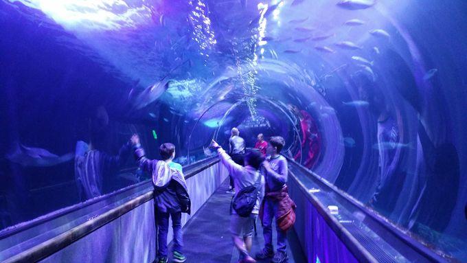 Pier39一押し!魚を身近に感じられる水族館「Aquarium of the Bay」とは?