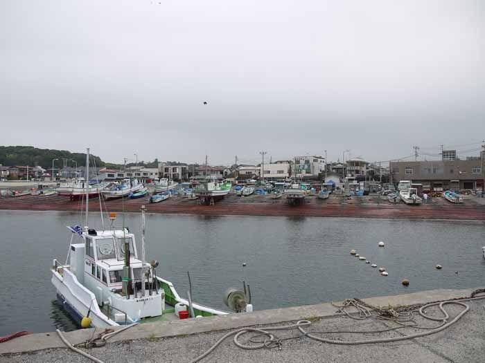 新鮮なシラスが食べたいなら腰越漁港へ