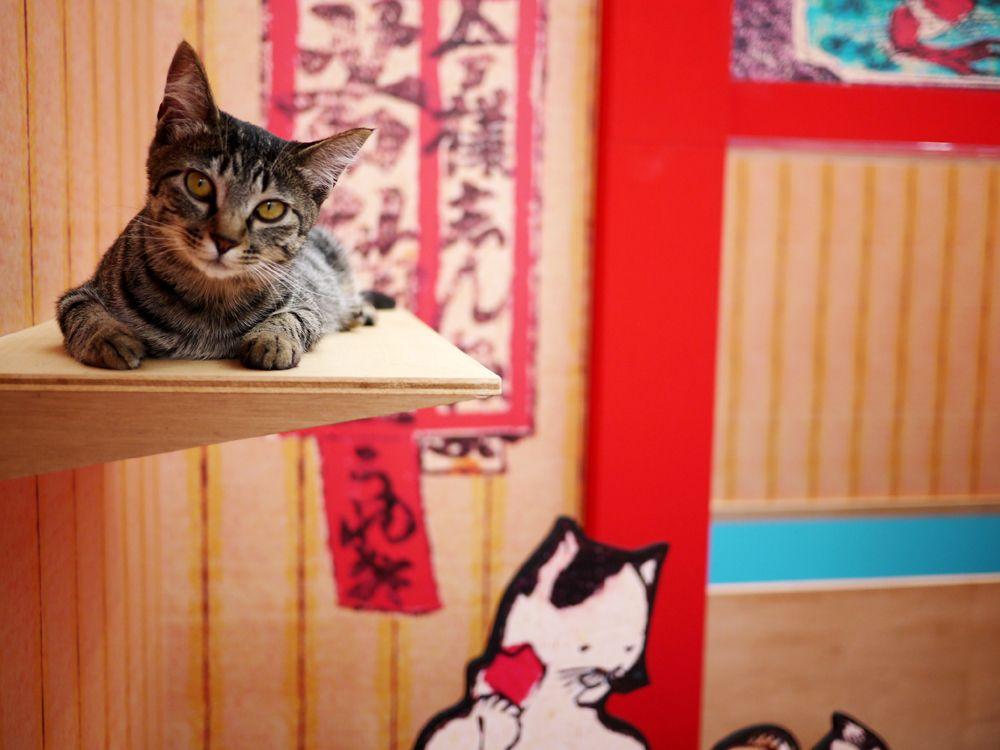 浮世絵の猫の中を本物の猫が走る走る…