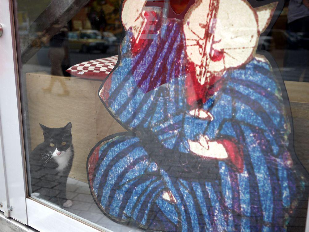 江戸の風情が残る両国ならではの和風猫カフェ