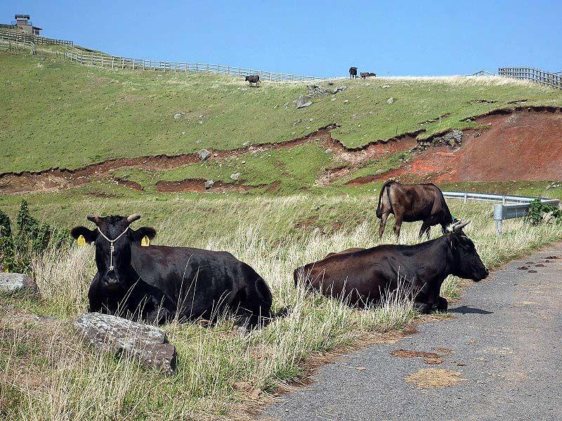 13時:牛と触れ合いながら赤ハゲ山の展望台へ!