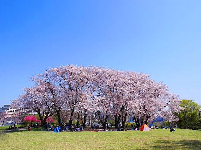 都筑区内には他にも桜の名所が
