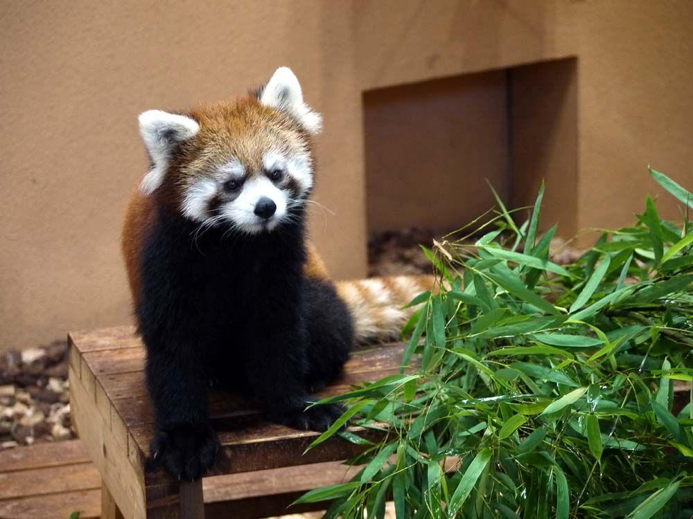 1日目午前 かわいい動物に会える日本平動物園