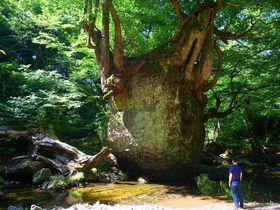 まるでトトロのネコバス!?秋田・五城目の奇岩「ネコバリ岩」