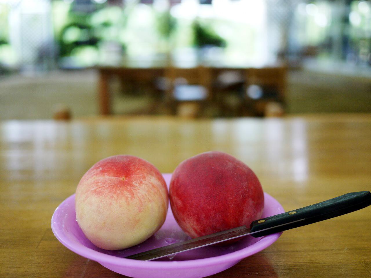 桃狩り・ブドウ狩り!季節のフルーツ狩りを楽しもう