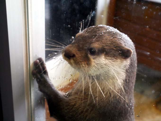 コツメカワウソと握手!おもしろカワイイが満載の「箱根園水族館」