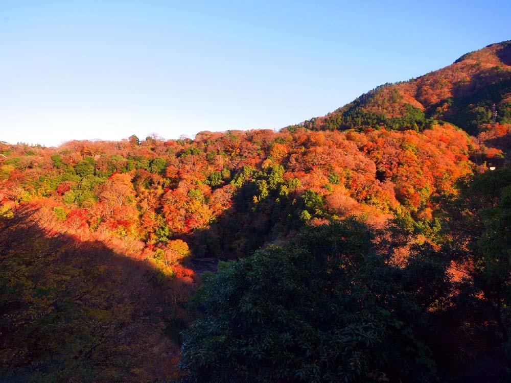 渓谷美に癒される「箱根自然薯の森 山薬」