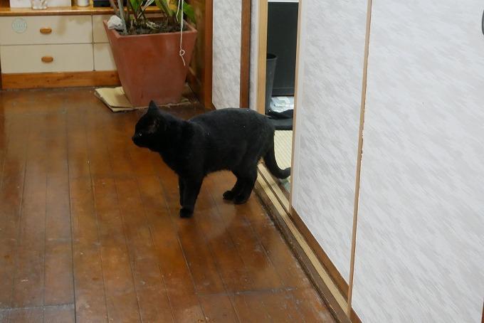 「かま家」は2匹の看板猫がお出迎え