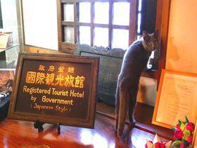 長野県渋温泉「金具屋」の魅力は歴史・温泉・料理、そして猫