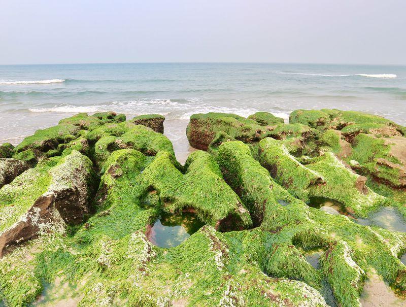 まるで緑の絨毯!台湾北部・春限定の海辺の絶景「老梅緑石槽」