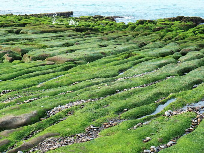 緑色の絶景を眺めることができるのは干潮時