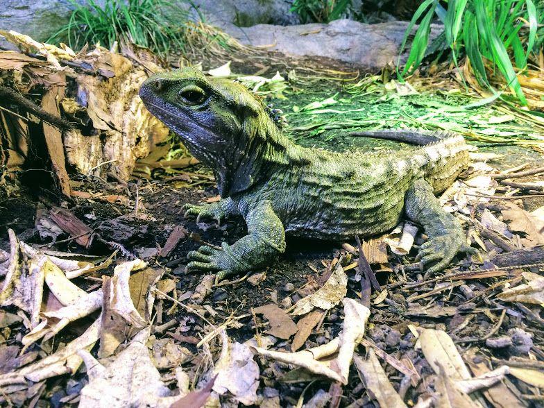 大都市に広がる動物の楽園!NZ「オークランド動物園」