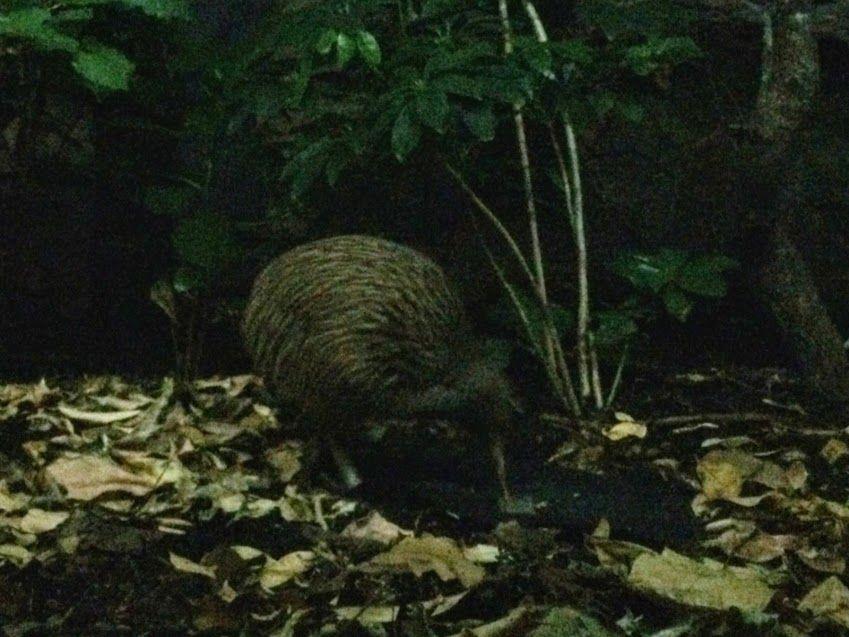 ニュージーランドならではの動物に会いに行こう!