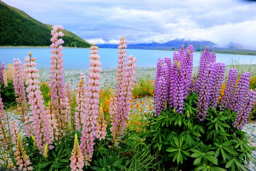 ニュージーランド 旅行 ベストシーズン