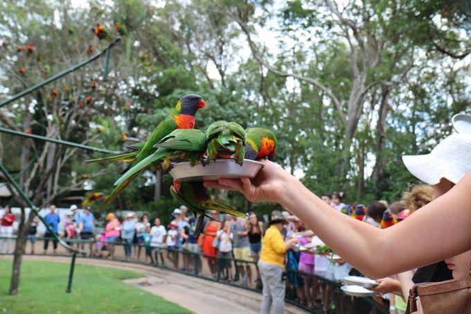 虹色の羽を持つ鳥、ロリキートの餌付けは必見