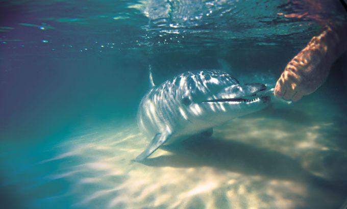 モートン島でのハイライトは、世界でも珍しい野生イルカへの餌付け体験!