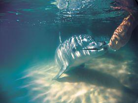 野生のイルカに餌付け体験!オーストラリア・モートン島