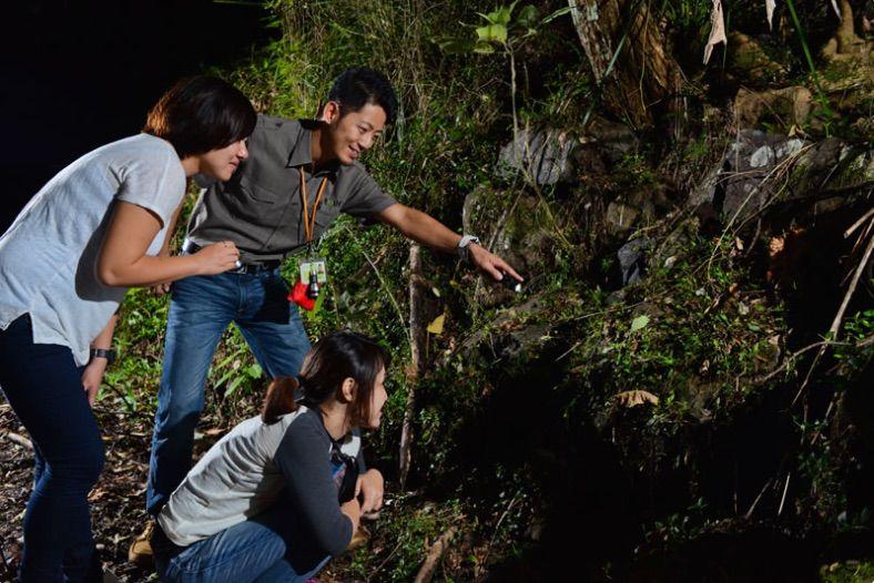 約1時間のジャングル散策は発見がいっぱい