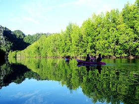 ランカウイ島の大自然を満喫!カヤックでマングローブ探検ツアー