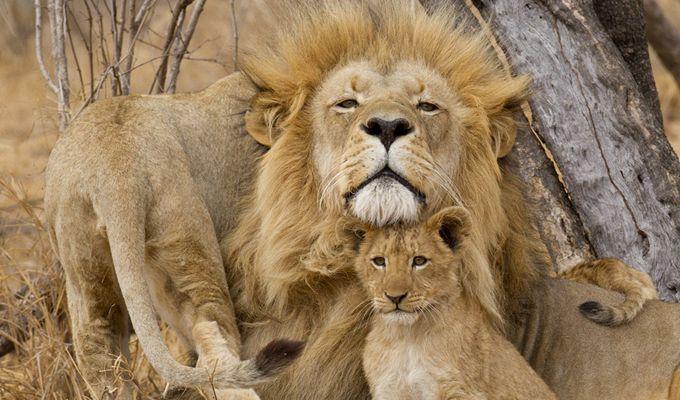 間近で見る野生動物は迫力満点!