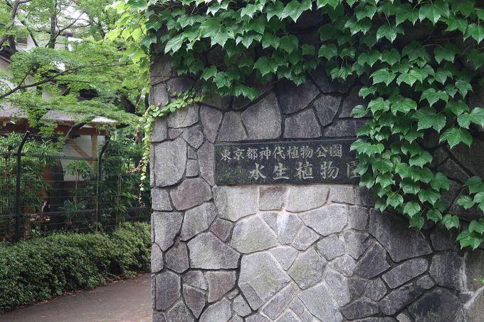 都会のオアシス! 水生植物に出会える植物公園