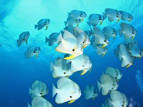 安く潜れる秘境!タイのダイバーズ天国・タオ島