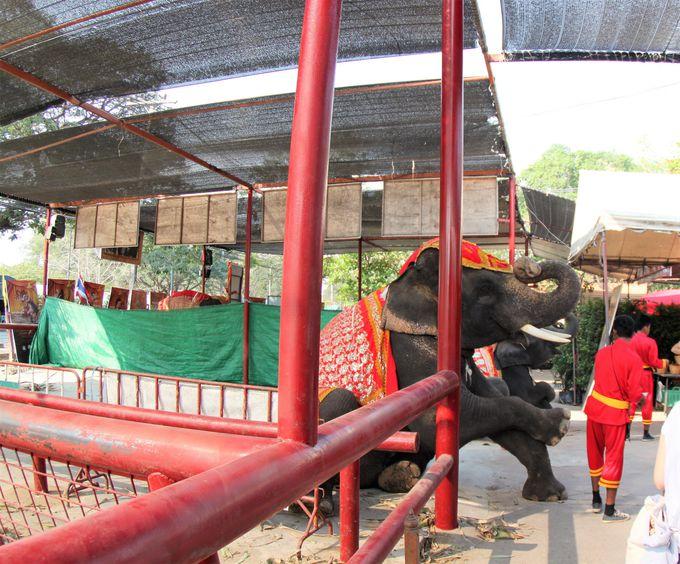 「ワット・プラ・ラーム」は象に乗りながら観光!