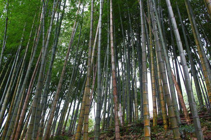 初めての那智は入門ルートの熊野古道・中辺道へ