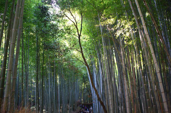 1日目午前:「野宮神社」から「竹林の小径」へ