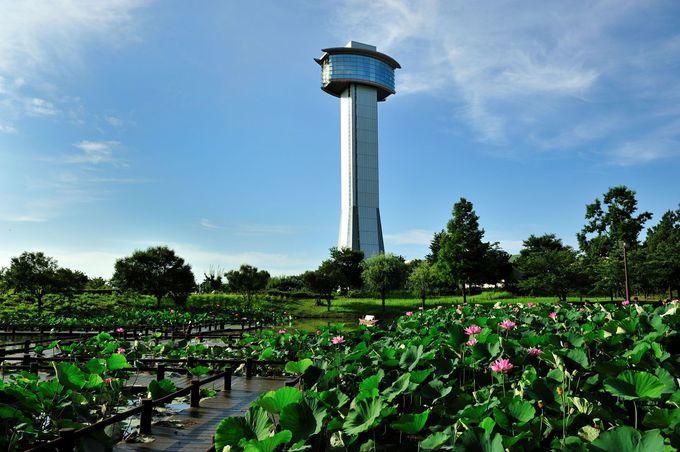 蓮池を見下ろす「古代蓮会館展望タワー」
